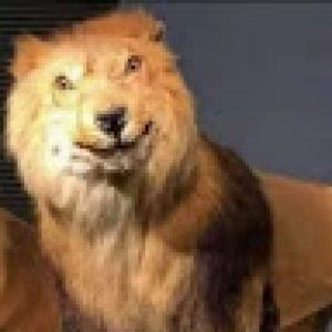 Un leon seco • Hace 81 años